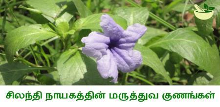 benefits of silandhi nayagam