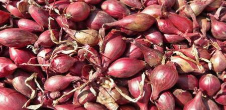 in chennai onion rate low after long days