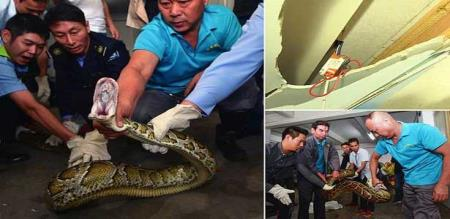 in china snake inside of beauty paler peoples shocked