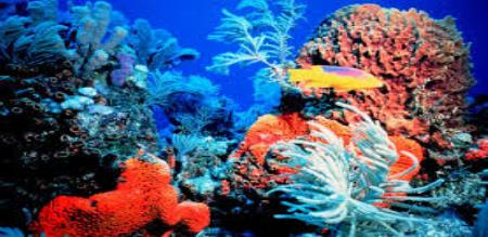 reason for Corals and fishes died