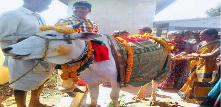 baby shower function for cow in katpadi