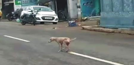 Thirunvannamalai street dogs affected unknown diseases