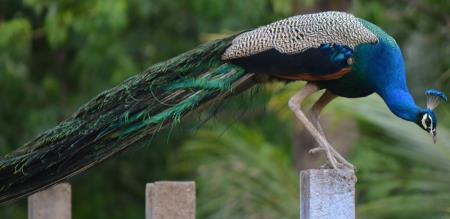 kurumpapatti forest zoo
